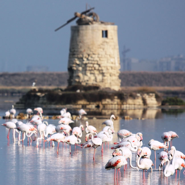 Salt Pans reserve, mill and flamingos